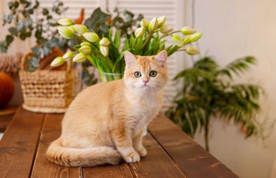 Poes is ook blij met mooie bloemen