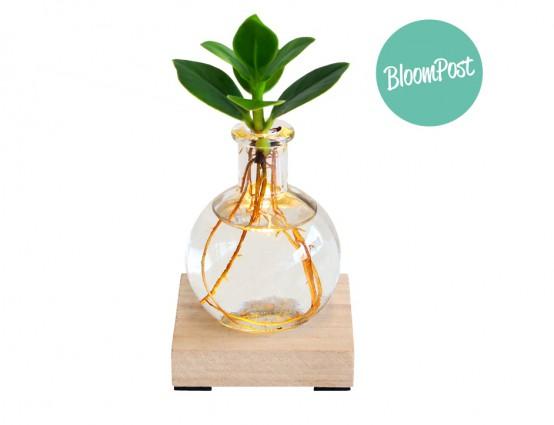 Lichtplantje als cadeautje versturen met pasen