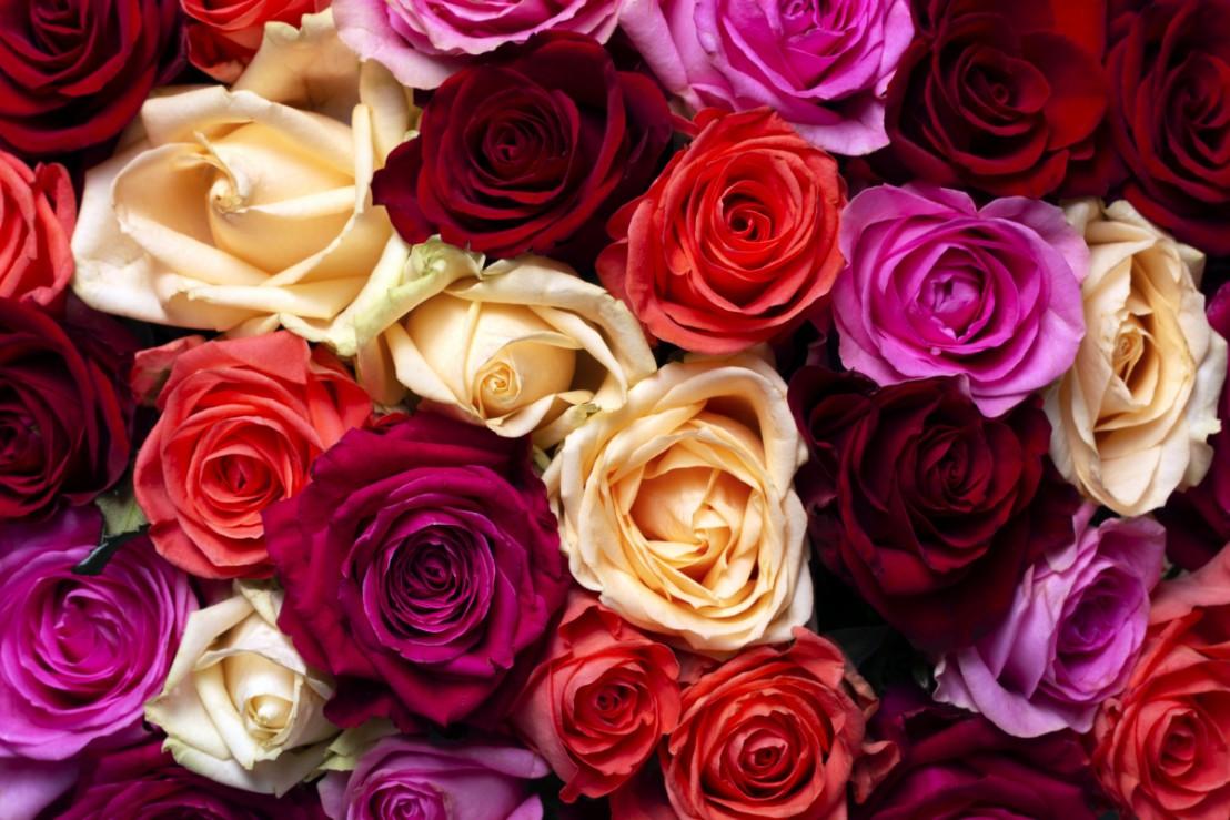 Rozen valentijnsdag in verschillende kleuren
